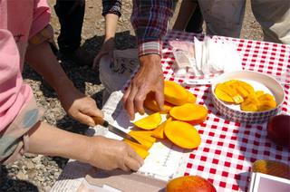 マンゴー収穫祭